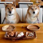 Cane_犬